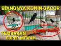 Konin Gacor Tembakan Mewah Super Pedas  Mp3 - Mp4 Download