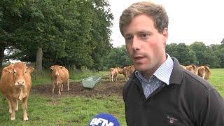 Les éleveurs indignés par les vidéos chocs des abattoirs