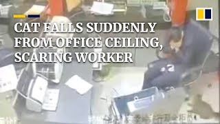 Cat falls suddenly from office ceiling, scaring worker