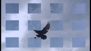 Николаевские и Кировоградские голуби Видео(, 2013-10-15T17:21:49.000Z)