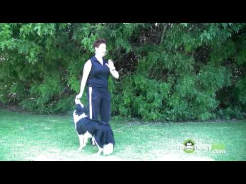 dog-agility---training-your-dog-a-release-word