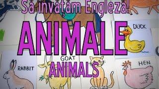 Sa invatam engleza - ANIMALE/ANIMALS (PLURALUL+PREPOZIŢII de loc) - Let's learn English!