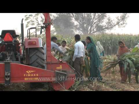 Forage harvester or Silage harvester in the fields of Ludhiana