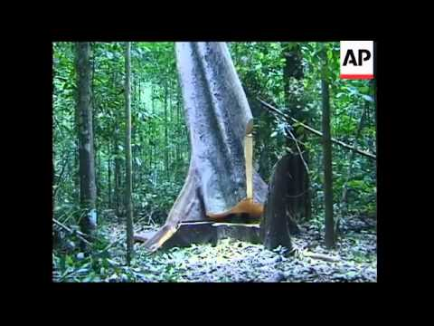 Brazil's efforts to cut illegal logging
