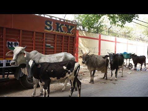 インド旅行記・India Travelデリーニューデリーで付近の裏路地とかを初散歩Delhi・New Delhi