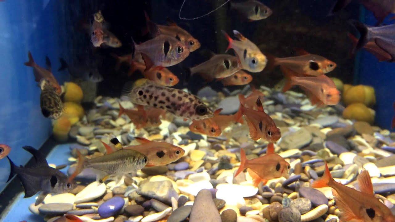 Добро пожаловать на официальный сайт воронежского океанариума в сити парк град!. На нашем сайте вы можете узнать расписание, цены, наш.