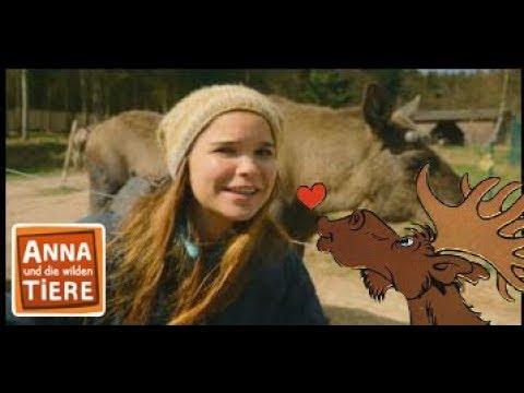 Vom Elch Geknutscht Doku Reportage Fur Kinder Anna Und Die Wilden Tiere Youtube