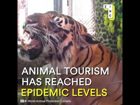LET'S PUT THE END OF ANIMAL TOURISM!!!!!