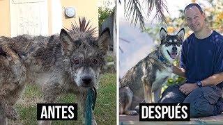 Perro o Lobo? - Transformación