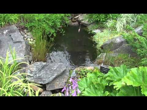 MUN Botanical Garden Tour