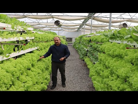 Hydroponic vegetable farming in India-Complete information about hydroponic system