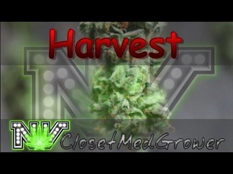 Harvest: Dark Plasma, day 61-63