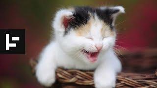 Top funny cats
