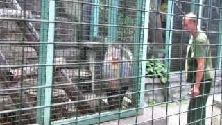 Мандрил. Mandril. Moscow Zoo