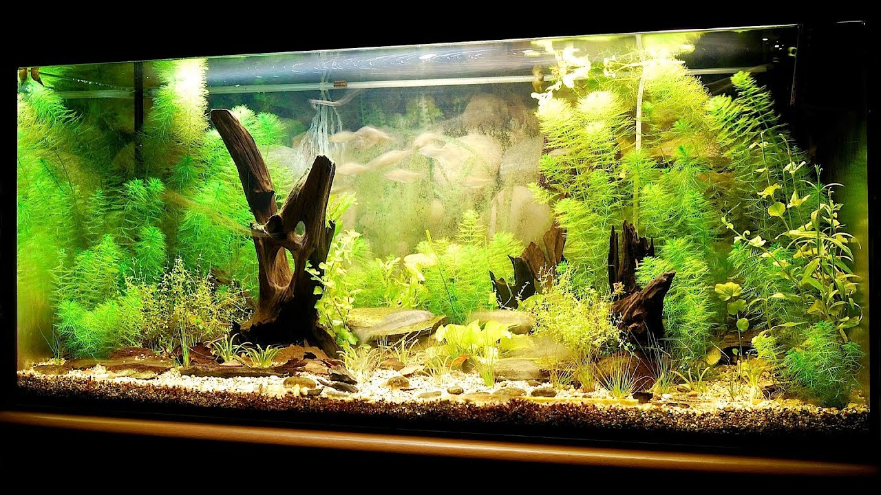 How to set up a fish tank aquarium care youtube for Freshwater fish tank setup