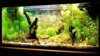 How To Set Up A Fish Tank | Aquarium Care