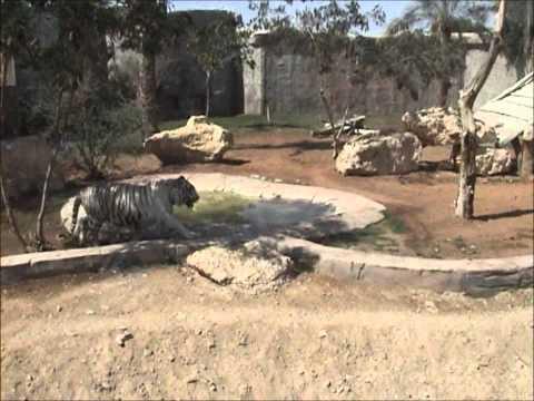 Al Ain Zoo - Part 1
