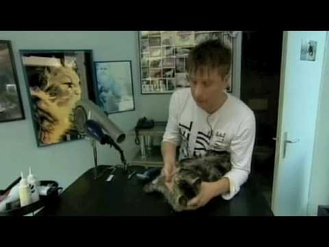 Sacha Rapo - Toiletteur Pour Chats