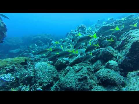 Marine biodiversity in S.Vicente Is. (Cabo Verde) - a video remote approach