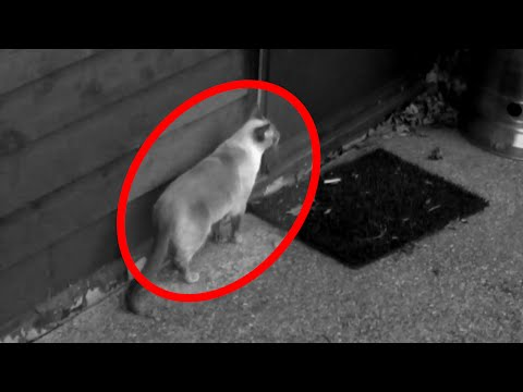 Cat Disappears Caught on CCTV Camera (TELEPORTATION Caught on Tape)