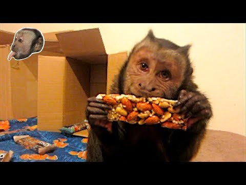 Monkey UnBoxing KindBars! Yummy Treats!