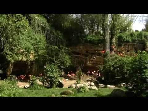 Zoo de Doué
