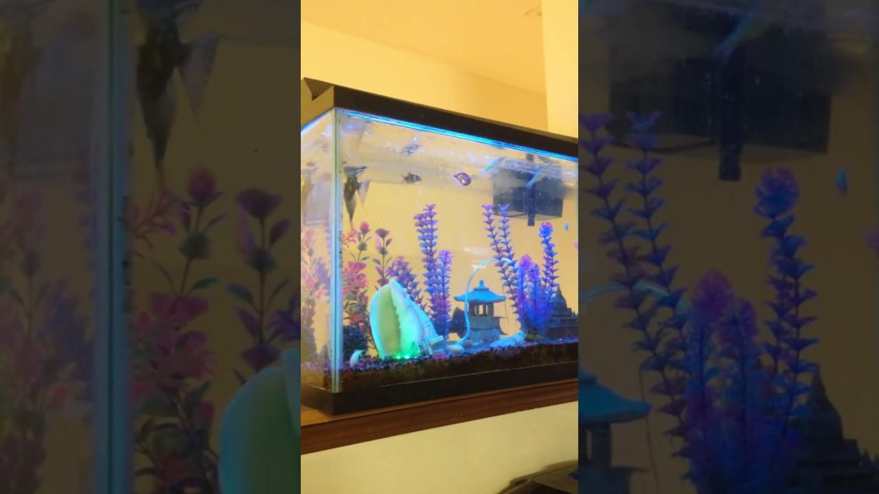 25 Gallon Exotic Tropical Freshwater Fish Tank Sweet Water Aquarium