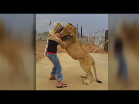 LION AND WOMAN HUG EACH OTHER IN AN INCREDIBLE DISPLAY OF LOVE AND AFFECTION