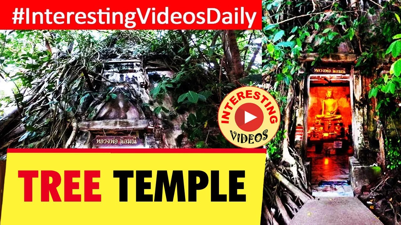 WAt BANG KUNG | Banyan Tree Temple | Amphawa, Samut Songkhram, Thailand | INTERESTING VIDEOS | THAI