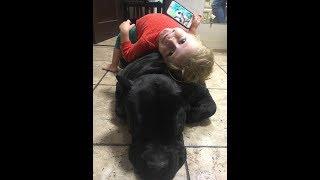 Huge dog submits to little babygirl ___ Гигантский пес покоряется маленькой крохе.