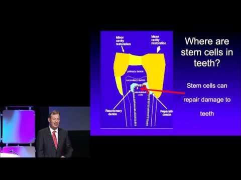 Sample - Generation of Teeth Using Stem Cells