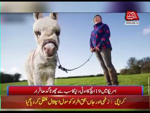 Little donkey! Ottie Named World's Smallest at 19 Inches