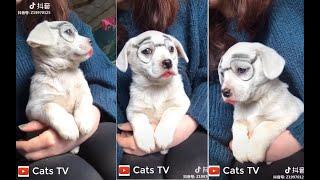 Cats TV | chó cảnh dễ thương nhất tik tok - tik tok china 4K