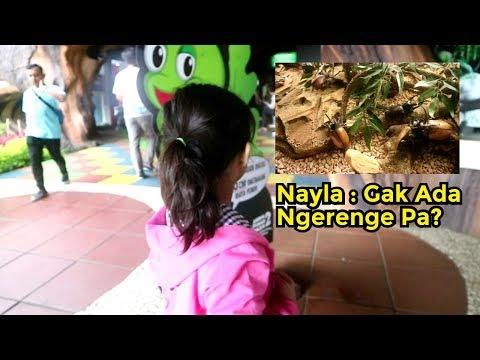 nafa-nayla-kenalan-dengan-para-kumbang-di-jatim-park-2-batu-malang