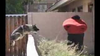 Police K9 And Pets By Falco K9 Academy