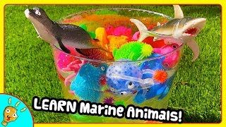 Learning MARINE Animals from a Watery Bucket by Squishee Nugget