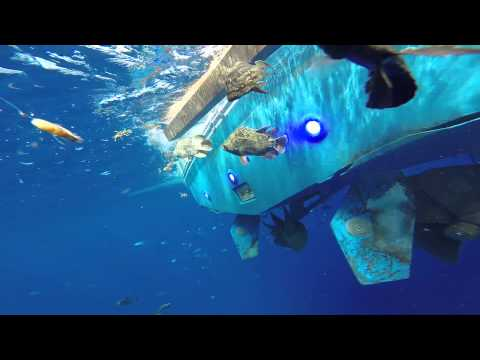 OceanLED lights help you catch fish during the day | Peter Miller Fishing