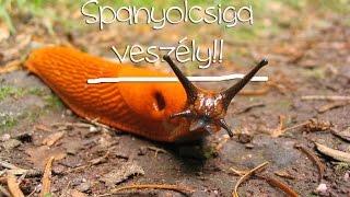 Gyógymód a meztelen csigák parazitái ellen. hogyan kell kezelni a paraziták ellen