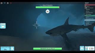 Roblox Sharkbite Gameplay!!! Sie können Menschen in der Lobby als Hai töten?!?