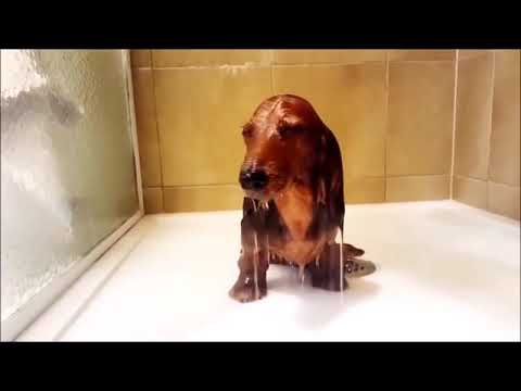 Funny Dachshund Compilation # 2