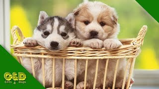 😂Funniest 🐱Cats And 🐶Dogs Compilation - Cute Cat and Dog Pet Animals Funny Vines June 2019