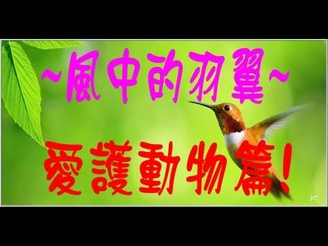 風中的羽翼~CC字幕....(愛護動物篇!Protect the animals) - YouTube