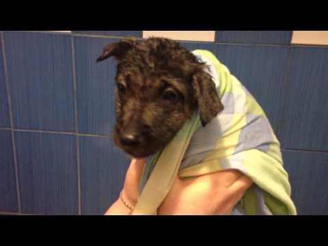 Подобрали бездомного перепуганного щенка на Пасху