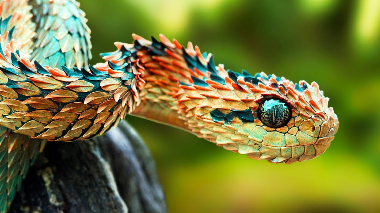 The Rarest Snakes In The World Youtube