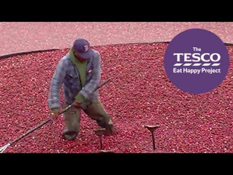 Crimson Cranberries - how do cranberries grow?