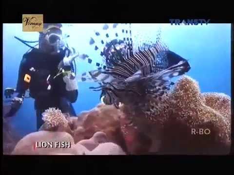 My Trip My Adventure Trans TV 3 Oktober 2015   Maluku Barat Daya 3 Full
