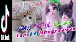 Kumpulan Video Kucing Lucu Dan Menggemaskan