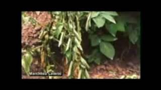 Tierra de Diatomeas - Fertil P Argro ® - Enfermedad Ralstonia Solanacearum en Plantas y Tubérculos