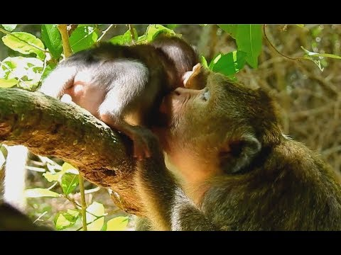 Be Careful ! Female Monkey Do Wrong Care To Baby | Yong Mom Care Her Baby So Much.