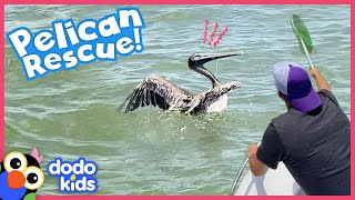 Tangled! A Kid And Some Boat Rescuers Try to Save A Wild Pelican | Rescued! | Dodo Kids